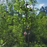 forêt fruitière permaculture