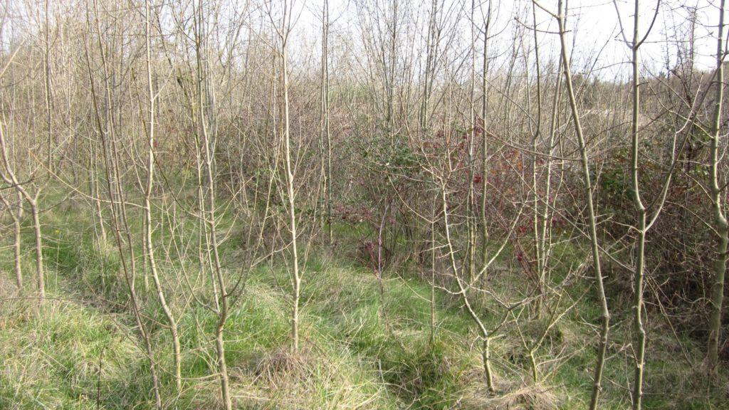 Mise en place d'une forêt fruitière à partir d'une friche