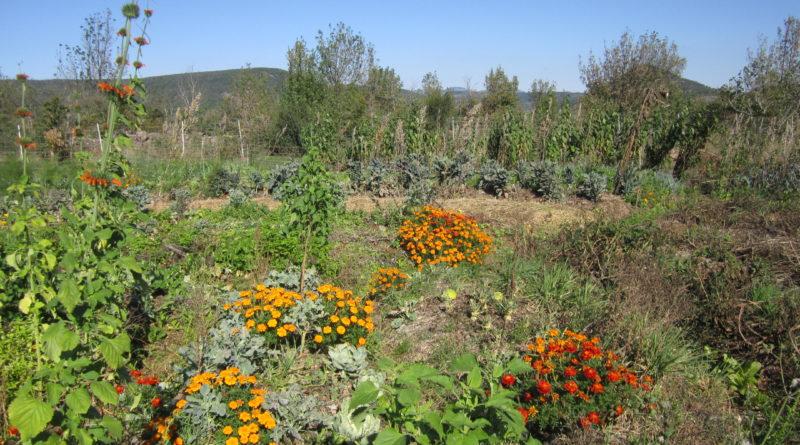 Introduction au maraîchage agroécologique et biodynamique sur de petites surfaces – 19, 20 et 21 mars