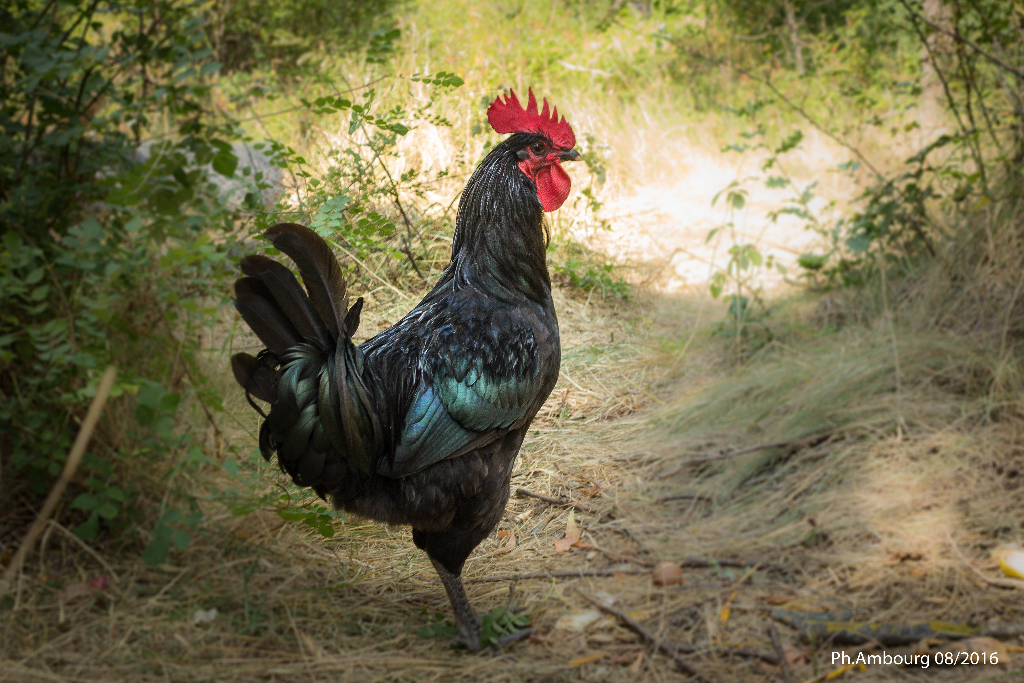 coq permaculture