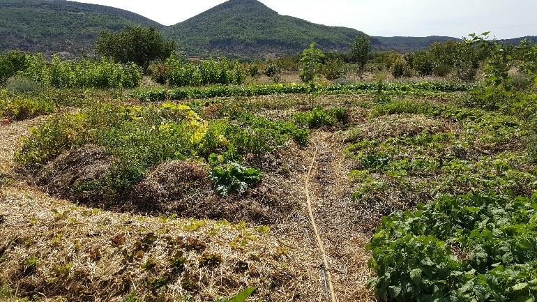 Générer une terre vivante au potager