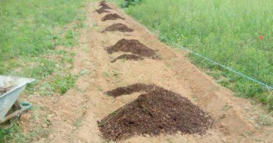 Comment redonner vie à un sol mort ou très dégradé ?