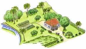 Le jardin créole : une tradition permacole
