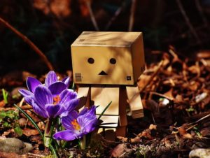 bonhomme en carton regardant un crocus dans un jardin, une sorte de symbole du mulch carton en permaculture