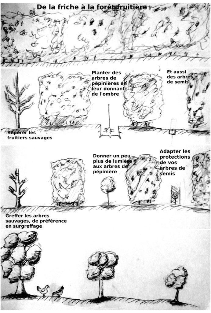 permaculture Mise en place d'une forêt fruitière à partir d'une friche
