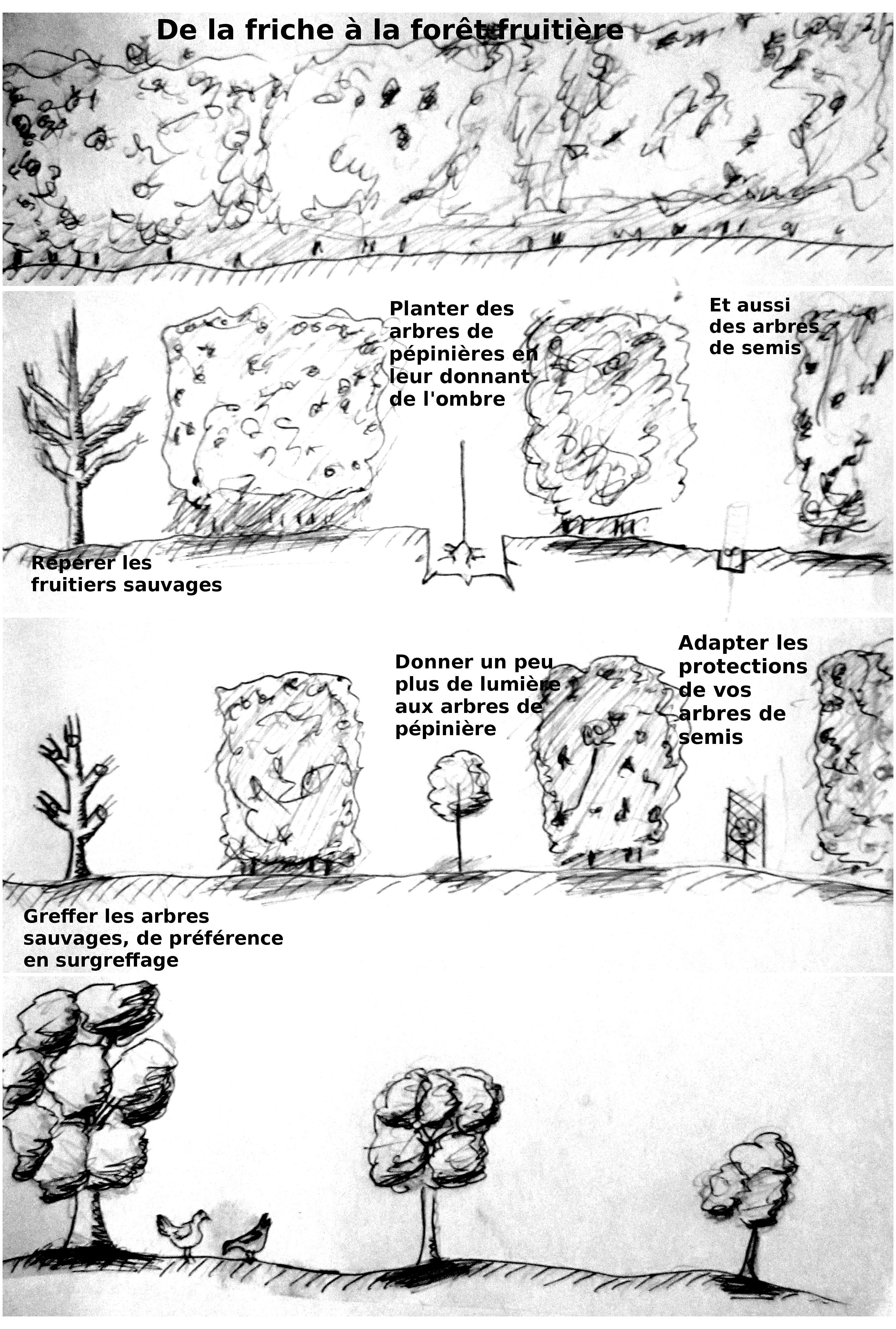 Comment Planter Un Arbre Fruitier mise en place d'une forêt fruitière à partir d'une friche